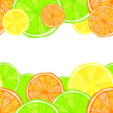 Bright seamless citrus background Stock Photos