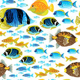 Bright seamless pattern with sea fish. Marine life  background. It can be used for wallpaper, pattern fills, web page background, surface textures Royalty Free Stock Images