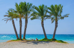 Bright seascape with couple under palms. Unrecognizable couple relaxing under palm trees against of blue sea Royalty Free Stock Image
