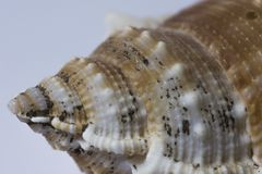 Bright Seashell close up isolated. Ocean sea shell, found on the beach in the summer. stock photo