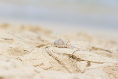 Bright seashell lies on the beach in the sand. Stock Images