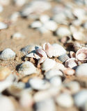 Bright seashells on the seashore. Beautiful seashells on the beach. Twisted shell beige yellow and pink colors. Royalty Free Stock Photography