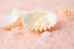 Bright seashells on soft pink terry texture Stock Photos