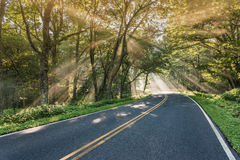 Bright Shafts of Light in Tangle of Trees Stock Photography