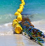 Bright Shark Net: Coogee Beach, Western Australia royalty free stock image