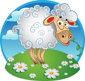 Bright sheep with blade of grass on color stock images