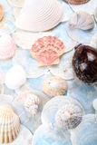 Bright shell selection Stock Image