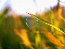 a bright shimmering soap bubble hung on a green Sunny summer meadow royalty free stock photos