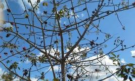 Bright sky beyond flower tree Stock Photography