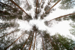 Bright sky in forest Royalty Free Stock Images