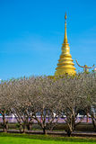 Bright sky with grass field in Nan Museum infront of golden pagoda Royalty Free Stock Photos