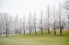 Frosted white trees on green grass field in winter royalty free stock photography