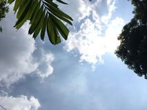 Bright sky with shade of leaves. The sky is bright with the shade of green leaves and the foliage of the leaves is in the sky royalty free stock image