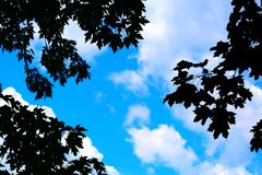 Bright sky Stock Images