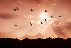 Bright sky on sunset or sunrise with flying birds natural backgr Royalty Free Stock Image