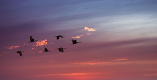 Bright sky on sunset or sunrise with flying birds natural backgr Royalty Free Stock Photography