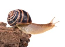 Bright snail Stock Images
