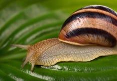 Bright snail Royalty Free Stock Photos