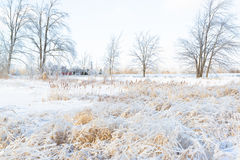 Bright Snowy Farmers Field Wintertime Stock Photography