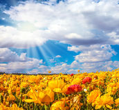 The bright southern sun shines Royalty Free Stock Photo