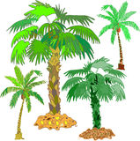 Bright splendid palms Royalty Free Stock Photos