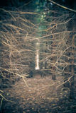 Bright spot in the forest Stock Photos