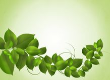 Bright spring background with fresh green leaves.  royalty free illustration