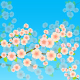 Bright Spring Background With Sakura Stock Photography