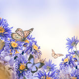 Bright spring chrysanthemum Royalty Free Stock Image