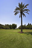 Bright spring day in tropical park Stock Photography