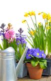 Bright spring flowers Royalty Free Stock Images