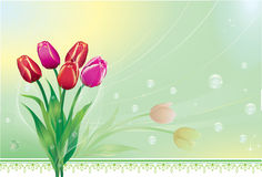 Bright spring flowers Stock Image