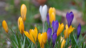 Bright spring flowers Stock Photography