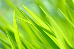 Bright spring grass close up in the field with sunlight bokeh background Royalty Free Stock Image