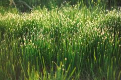 Bright spring grass field with sunlight bokeh background Stock Image