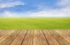 Bright spring with nature rice field background perspective wooden plank Royalty Free Stock Photo