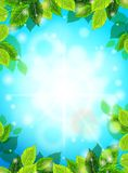 Bright Spring realistic background, blue sky, green leaves. The sun's rays, glare, glow. Template for web design. Vector Royalty Free Stock Images