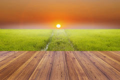 Bright spring with rice field and sunset background and wooden plank Royalty Free Stock Photos
