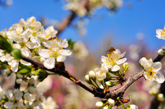 Bright spring sunny background Royalty Free Stock Photos