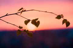 Bright spring sunset in the evening from the window. Against the background of leaves of tree branches. contours of nature`s shad stock photo
