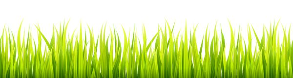 Bright springtime lawn banner. Seamless summer or spring grass decoration. Fresh greenery height vector illustration