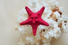 Bright starfish on coral. A bright starfish on a white coral. sea, sun, beach stock photography