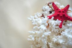Bright starfish on coral. A bright starfish on a white coral. sea, sun, beach royalty free stock images