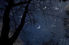 Bright stars in lonely crescent night over the fall forest. Bright stars in lonely crescent night in the fall forest of winter season royalty free stock images