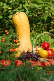 Bright still life of fruit and vegetables Royalty Free Stock Images