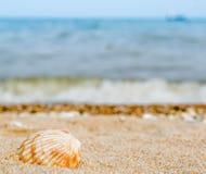 Bright striped shell in quartz sand against the blue sea€ stock photo