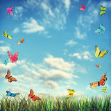 Bright summer background with butterflies and grass Royalty Free Stock Image