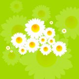 Bright summer background with camomile flowers Royalty Free Stock Photography