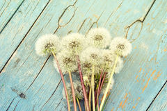 Bright summer background with fluffy dandelions. Bright summer background: fluffy dandelions  on an aged painted blue wood. Photo with toning Royalty Free Stock Image