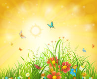 Bright summer background. Bright summer vector background with sun, flowers, butterflies and grass Royalty Free Stock Image